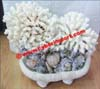 Decoration Natural Coral