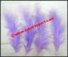Accessory Feather Fancy Loose
