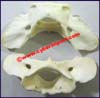 Fashion Jewelry Fittings Bone