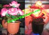 Decorative Light Up Plants