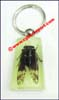 Insect Acrylic Keychain